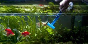 Clean Aquarium