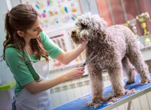dog grooming service
