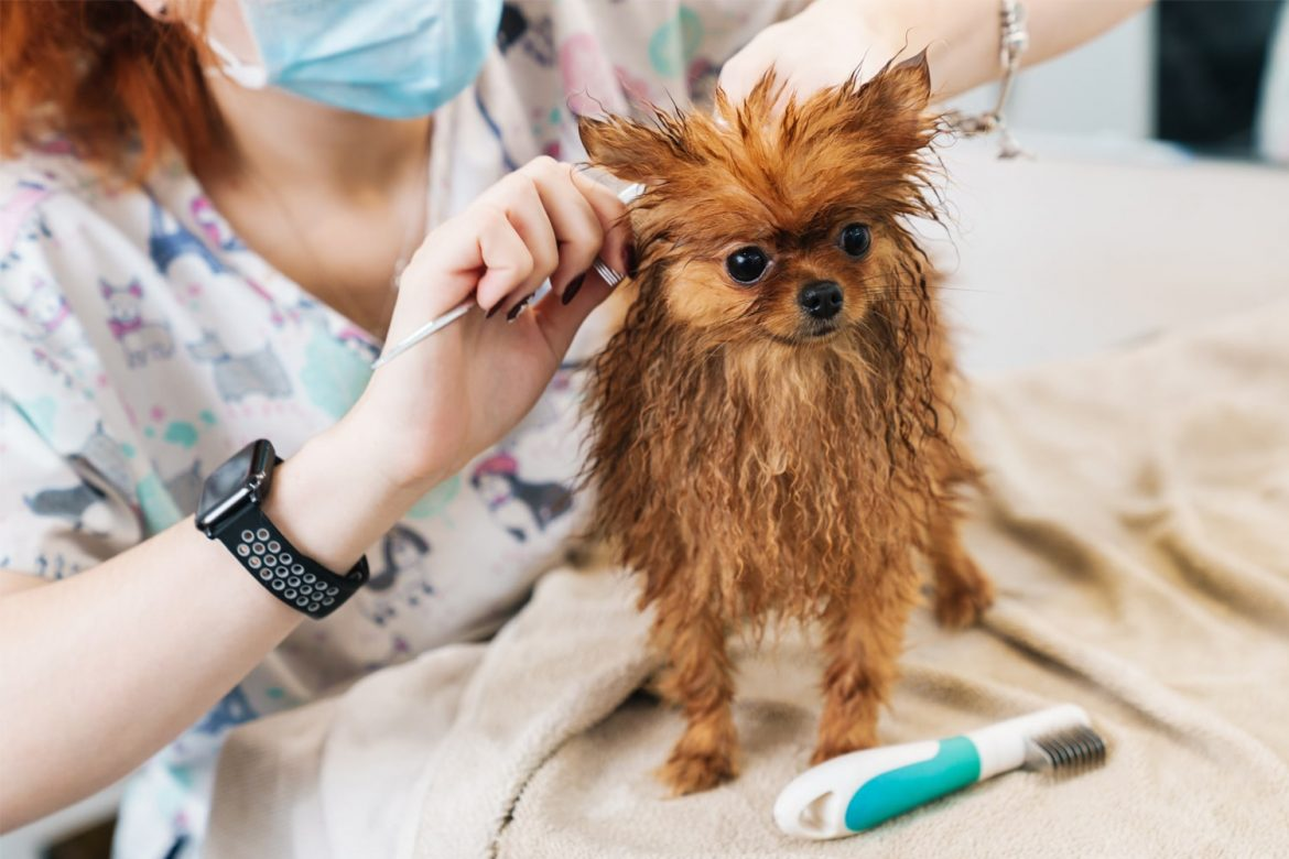 The Importance of Miami Dog Grooming You Should Know