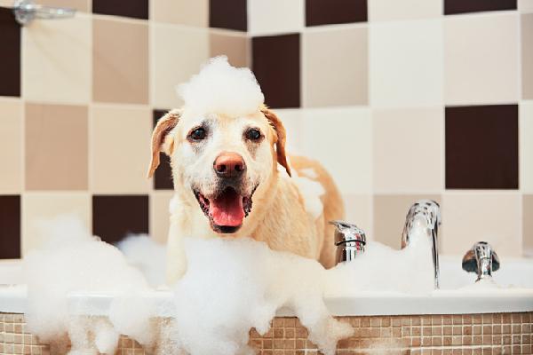 dog groomer boca raton Popularity – However to Learn More